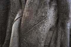 Предпосылка ствола дерева стоковая фотография rf
