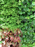 Предпосылка стены листьев Стоковое фото RF