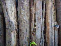 Предпосылка стены тимберса, деревянная текстура Стоковое фото RF