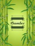 Предпосылка с бамбуковыми заводами и листьями Стоковое Изображение RF