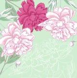 Предпосылка с белым и розовым пионом иллюстрация вектора