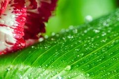 Предпосылка с лепестками и листьями цветка Стоковое Изображение