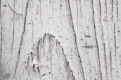 Предпосылка с деревом узлов разъединенным текстурой Стоковое Изображение