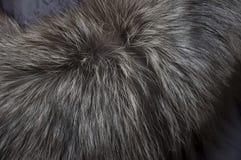 Предпосылка с естественным длинным серым мехом Стоковое Изображение RF