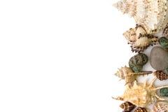 Предпосылка сделанная раковины изолированной над белизной Стоковые Изображения