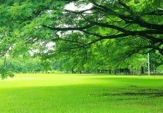 Предпосылка с зелеными деревьями в парке Стоковое фото RF