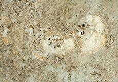 Предпосылка с ископаемым Nautilus Стоковое Фото