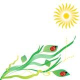 Предпосылка с листьями и ladybugs Стоковые Фото