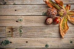 Предпосылка с листьями каштана стоковое фото rf