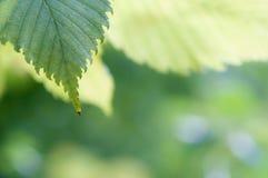 Предпосылка с листьями на верхней части Стоковые Изображения RF
