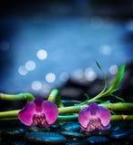 Предпосылка с камнем орхидей и бамбуком - морем Стоковые Фотографии RF