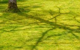 Предпосылка с красивой тенью дерева на зеленом поле на весне Стоковые Фотографии RF