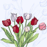 Предпосылка с красным вином и белыми тюльпанами иллюстрация вектора
