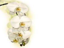 Предпосылка с орхидеей Стоковое Изображение