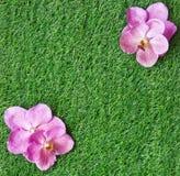 Предпосылка с орхидеями стоковые изображения rf