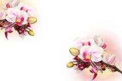 Предпосылка с орхидеями стоковое фото rf