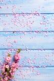 Предпосылка с розовой Сакурой цветет на голубых деревянных планках Стоковая Фотография
