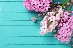 Предпосылка с розовыми гиацинтами и верба на зеленом цвете покрасили wo Стоковое фото RF