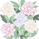 Предпосылка с розовым и белым пионом иллюстрация штока