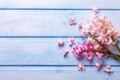 Предпосылка с свежими розовыми цветками гиацинтов Стоковое фото RF