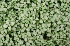 Предпосылка с серебристыми листьями Стоковое Изображение