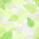 Предпосылка с скелетами листьев Стоковая Фотография