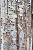Предпосылка с старой древесиной Стоковое Фото
