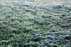 Предпосылка с травой в заморозке утра стоковые изображения
