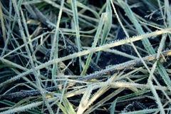 Предпосылка с травой в заморозке утра Стоковое Фото