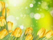 Предпосылка с тюльпанами 10 eps Стоковое Изображение