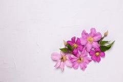 Предпосылка с цветками clematis Стоковые Фотографии RF