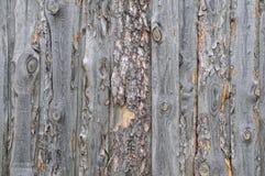 Предпосылка слябов сосны Стоковые Фото