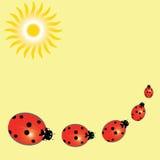 Предпосылка с ladybugs и солнцем Стоковые Изображения