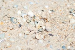Предпосылка с seashells, морское побережье песка Стоковое фото RF