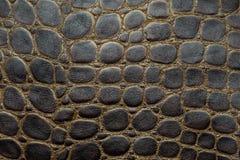 Предпосылка текстурированная крокодилом кожаная Стоковое фото RF