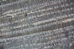 Предпосылка текстуры ладони деревянная Стоковое Изображение RF
