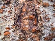 Предпосылка текстуры дерева расшивы Стоковое фото RF
