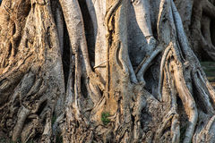 Предпосылка текстуры дерева Стоковые Фотографии RF