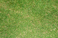 Предпосылка текстуры зеленой травы Стоковая Фотография