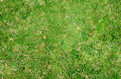 Предпосылка текстуры зеленой травы Стоковое Изображение