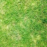 Предпосылка текстуры зеленой травы Стоковые Изображения