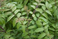 Предпосылка текстуры зеленых листьев Стоковая Фотография