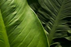 Предпосылка текстуры листьев Стоковая Фотография