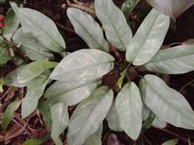 Предпосылка текстуры листьев Стоковое Фото