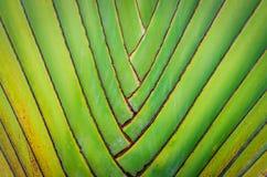 Предпосылка текстуры картины ветвей большой ладони складывая Стоковые Изображения RF