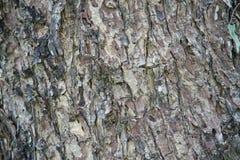Старая деревянная текстура Стоковое Изображение RF