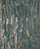 Предпосылка текстуры коры дерева Стоковое фото RF