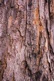Предпосылка текстуры коры дерева Стоковая Фотография