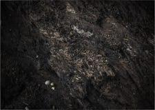Предпосылка текстуры коры дерева Стоковые Изображения RF