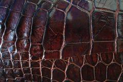 Предпосылка текстуры крокодиловой кожи Стоковое Фото